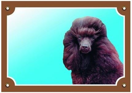 Barevná cedulka Pozor pes Pudl hnědý