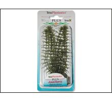 Rostlina Anacharis Plus 15 cm 1ks