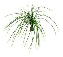 Lucky Reptile Congo Grass, cca 50 cm