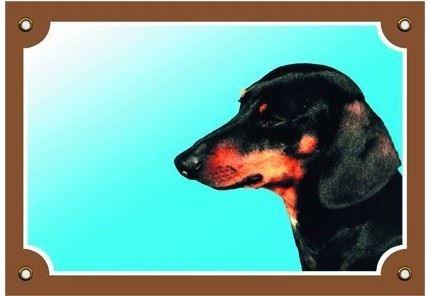 Barevná cedulka Pozor pes Jezevčík hladkosrstý černý