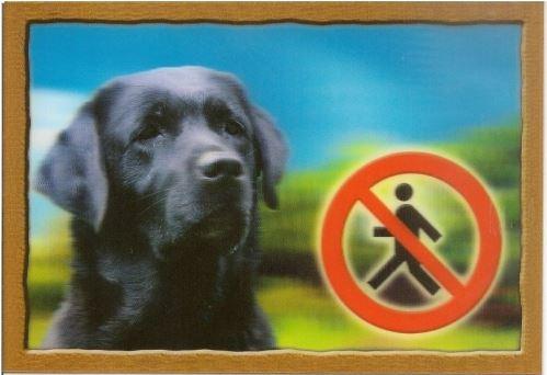 Cedulka 3D Pozor pes Labradorský retrivr (černý)