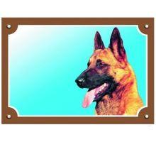 Barevná cedulka Pozor pes Belgický ovčák