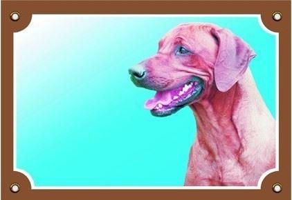 Barevná cedulka Pozor pes Rhodéský ridgeback