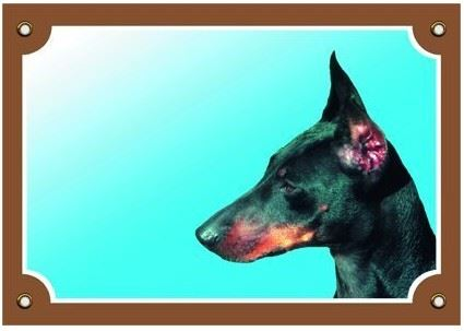Barevná cedulka Pozor pes Dobrman