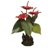 Lucky Reptile Anthurium - červené cca 35 cm
