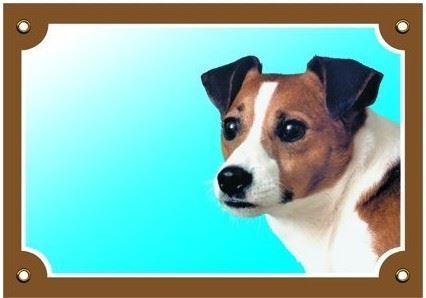Barevná cedulka Pozor pes Jack Russel terier