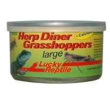 Lucky Reptile Herp Diner sarančata - cca 20 velkých  VÝPRODEJ