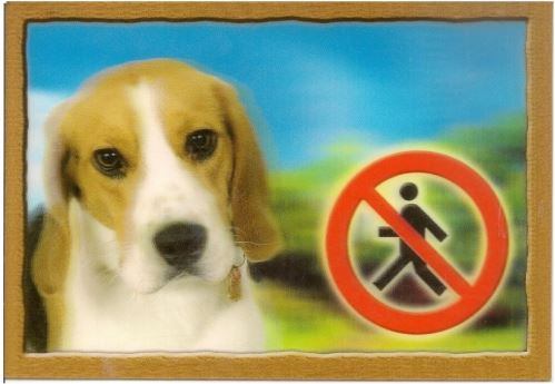 Cedulka 3D Pozor pes Beagle