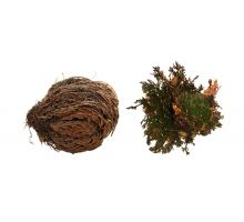 "Lucky Reptile ""Rose of Jericho"""