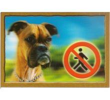 Cedulka 3D Pozor pes Boxer