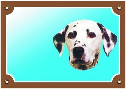 Barevná cedulka Pozor pes Dalmatin
