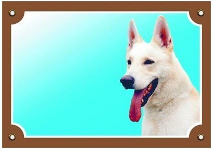 Barevná cedulka Pozor pes Kanadsko-americký ovčák VÝPRODEJ