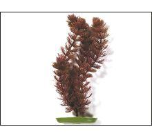 Rostlina Foxtail 20 cm 1ks
