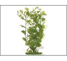 Rostlina Cardamine 30 cm 1ks  VÝPRODEJ