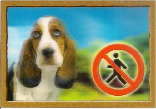 Cedulka 3D Pozor pes Baset