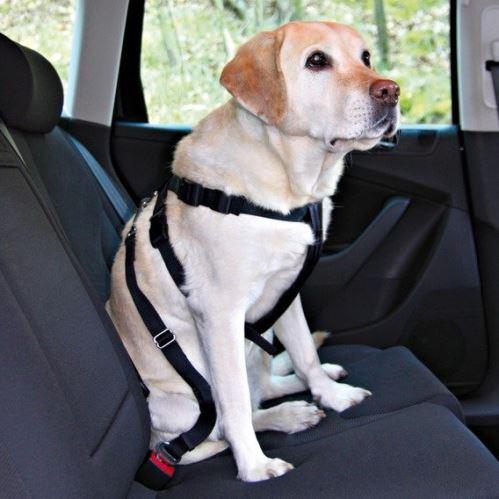 Postroj pes Bezpečnostní do auta