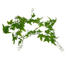 Lucky Reptile Ivy Vine, ca. 200 cm