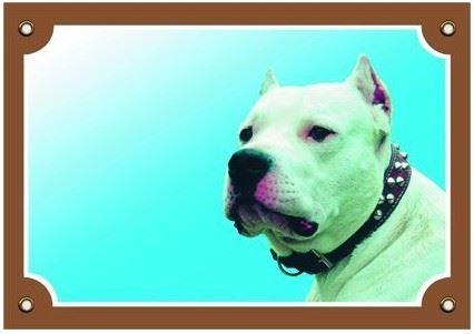 Barevná cedulka Pozor pes Doga argentinská