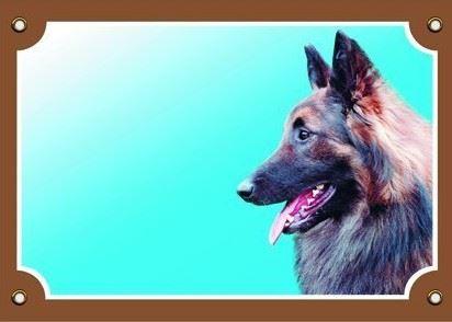 Barevná cedulka Pozor pes Tervueren