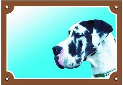 Barevná cedulka Pozor pes Doga harlequin