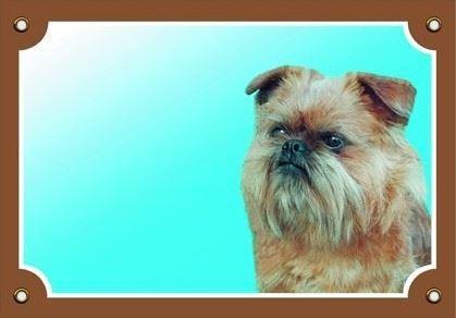 Barevná cedulka Pozor pes Grifonek bruselský
