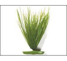 Rostlina Hairgrass 20 cm 1ks  VÝPRODEJ