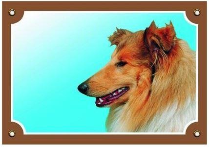 Barevná cedulka Pozor pes Kolie