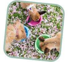 Miska pro psa, cestovní, BecoBowl Travel EKO růžová
