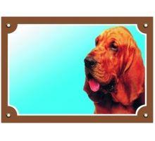 Barevná cedulka Pozor pes Bladhaund