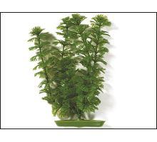 Rostlina Ambulia 20 cm 1ks