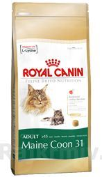 Royal canin Breed Feline Maine Coon