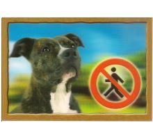 Cedulka 3D Pozor pes Stafordšírský terier