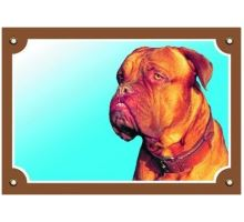 Barevná cedulka Pozor pes Bordeauxská doga