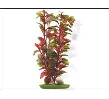 Rostlina Red Ludwigia 38 cm 1ks VÝPRODEJ