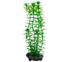 Rostlina TETRA Anacharis S