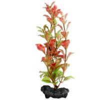 Rostlina TETRA Red Ludwigia S