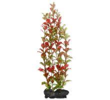 Rostlina TETRA Red Ludwigia L
